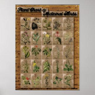 "Plant Chart of Medicinal Herbs 1  24"" x 20"""