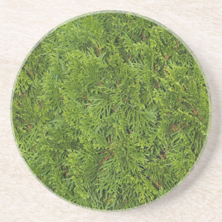 Plant/Flower Series---Cedar Bush Coaster