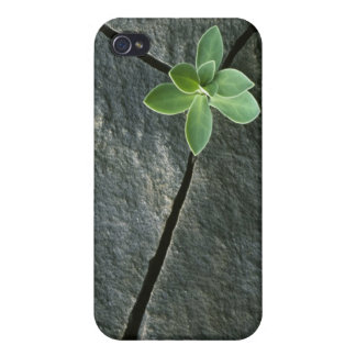 Plant Growing in Cracked Boulder Cases For iPhone 4