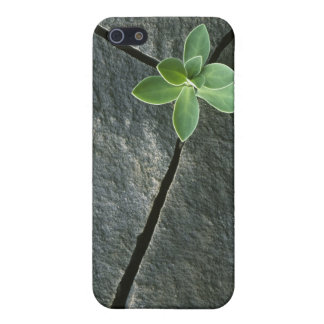 Plant Growing in Cracked Boulder iPhone 5/5S Cover