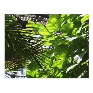 Plant Leaves against Louvers at Botanical Building Postcard