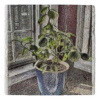 Plant on kitchen counter trivet