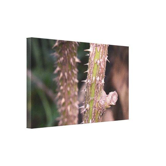 Plant Stem Thorns Nature Park Photography Canvas Print