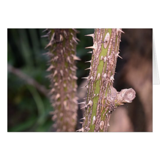 Plant Stem Thorns Nature Park Photography Card