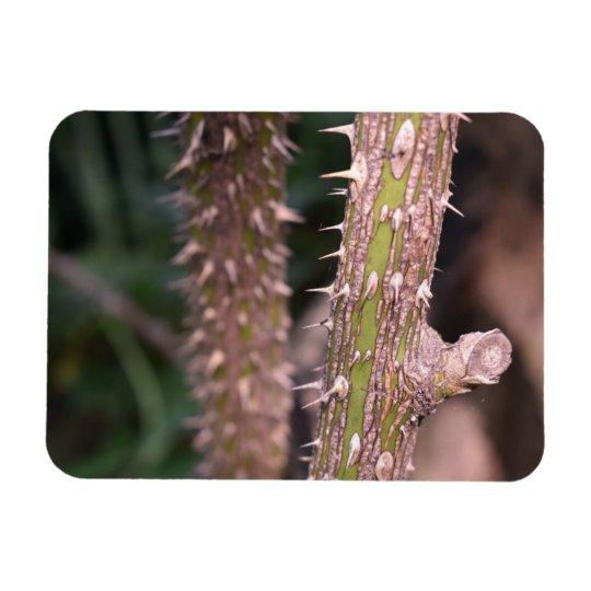 Plant Stem Thorns Nature Park Photography Magnet