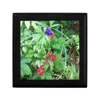 Plants at Pioneer Falls Butte Alaska Gift Box