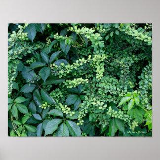 plants from Ken's garden Poster