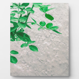 Plants over Wall Photo Plaque