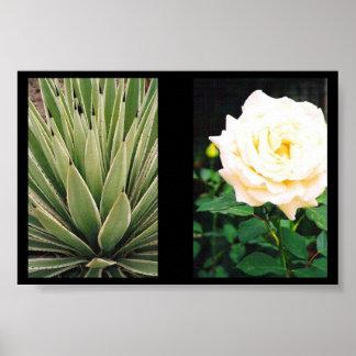 Plants Poster