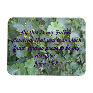 Plaque: Close-up of Grape Vine with Young Grapes Rectangular Photo Magnet