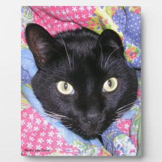 Plaque: Funny Cat wrapped in Blankets Plaque
