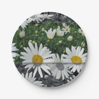 "Plate 7"", paper, Daisies 7 Inch Paper Plate"