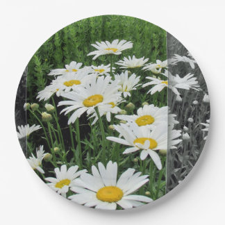 "Plate 9"", paper, Daisies 9 Inch Paper Plate"