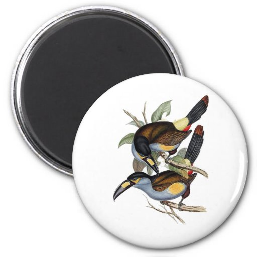 Plate-billed Mountain Toucan Magnets