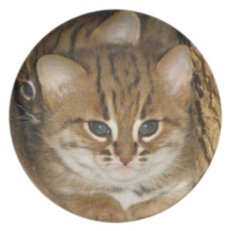 plate - rusty spotted cat