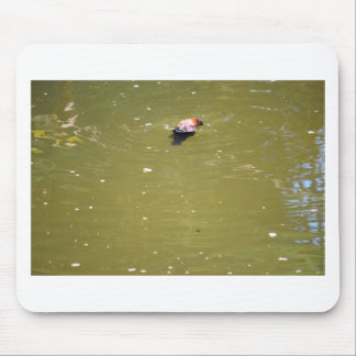 PLATYPUS DIVING IN WATER EUNGELLA AUSTRALIA MOUSE PAD