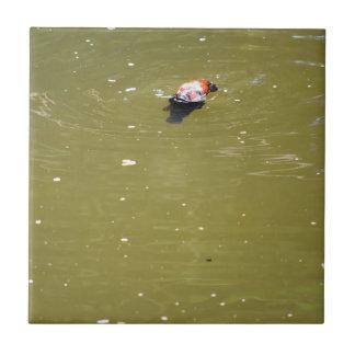 PLATYPUS DIVING IN WATER EUNGELLA AUSTRALIA TILE