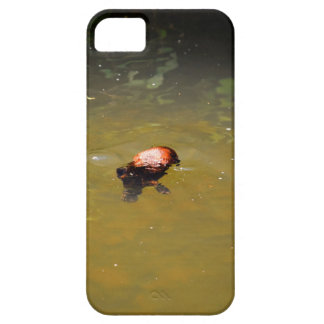 PLATYPUS EUNGELLA NATIOANL PARK AUSTRALIA iPhone 5 COVERS