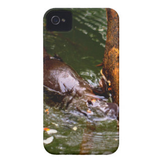 PLATYPUS EUNGELLA NATIONAL PARK AUSTRALIA Case-Mate iPhone 4 CASE