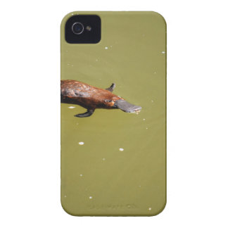 PLATYPUS EUNGELLA NATIONAL PARK AUSTRALIA iPhone 4 CASE