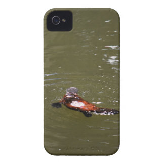 PLATYPUS EUNGELLA NATIONAL PARK AUSTRALIA iPhone 4 COVERS