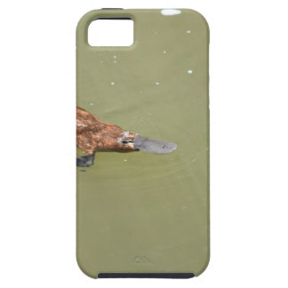 PLATYPUS EUNGELLA NATIONAL PARK AUSTRALIA iPhone 5 COVERS