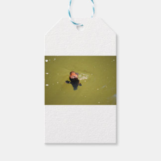 PLATYPUS EUNGELLA NATIONAL PARK AUSTRALIA PACK OF GIFT TAGS