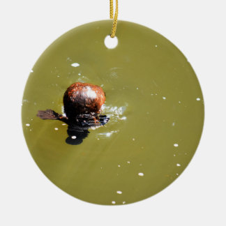 PLATYPUS EUNGELLA NATIONAL PARK AUSTRALIA ROUND CERAMIC ORNAMENT