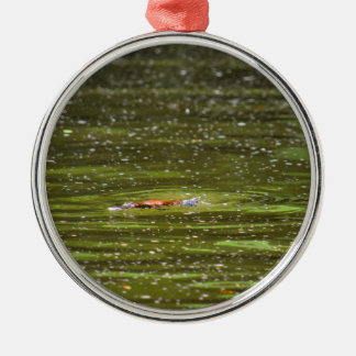 PLATYPUS EUNGELLA NATIONAL PARK AUSTRALIA Silver-Colored ROUND ORNAMENT