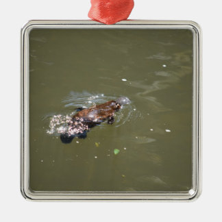 PLATYPUS EUNGELLA NATIONAL PARK AUSTRALIA Silver-Colored SQUARE ORNAMENT