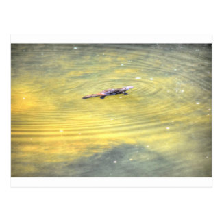 PLATYPUS IN WATER AUSTRALIA ART EFFECTS POSTCARD