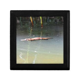 PLATYPUS IN WATER EUNGELLA AUSTRALIA TRINKET BOX