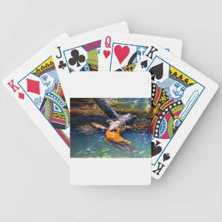 PLATYPUS IN WATER EUNGELLA NATIONAL PARK AUSTRALIA BICYCLE PLAYING CARDS