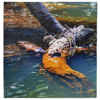 PLATYPUS IN WATER EUNGELLA NATIONAL PARK AUSTRALIA NAPKIN