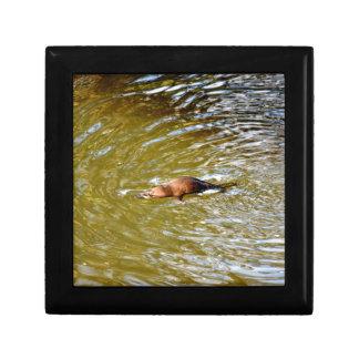 PLATYPUS IN WATER EUNGELLA NATIONAL PARK AUSTRALIA TRINKET BOX