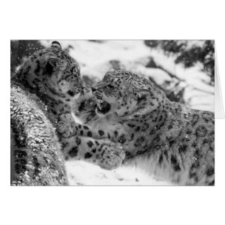 Play-Fighting Snow Leopard Brothers Card