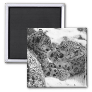 Play-Fighting Snow Leopard Brothers Magnet