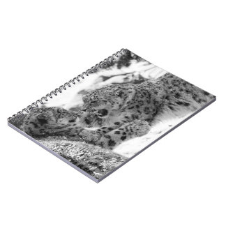 Play-Fighting Snow Leopard Brothers Notebook
