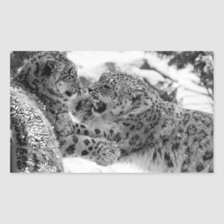 Play-Fighting Snow Leopard Brothers Sticker