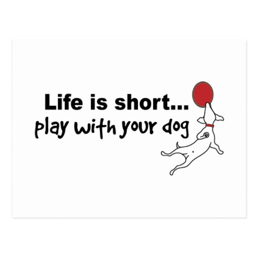 Play with Your Dog Postcard