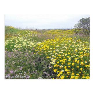 Playa del Rey Wildflowers - Mike Izzo Postcard