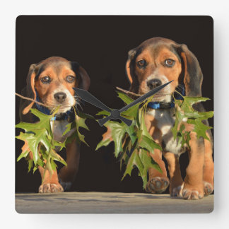 Playful Beagle Brothers Puppies Square Wall Clock
