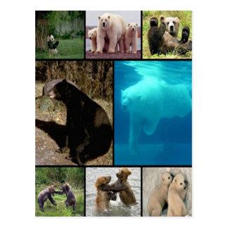 Playful Bears Postcard