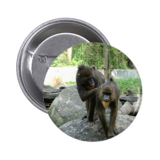 Playful, cute, smart and friendly baboons pinback button