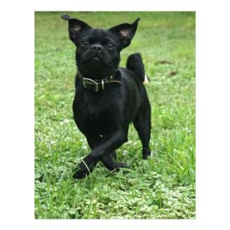 Playful Dog Letterhead