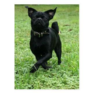 Playful Dog Postcard