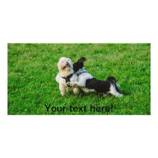 Playful dogs photo card