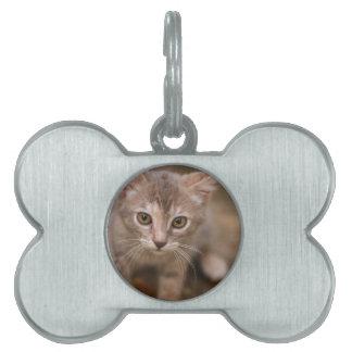 Playful Kitten Pet Tag