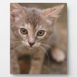 Playful Kitten Plaque