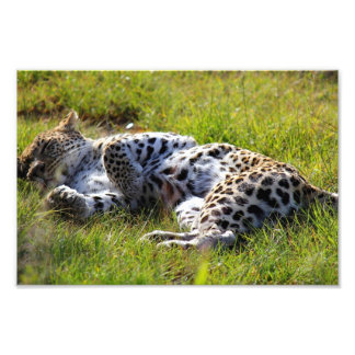 Playful Leopard Photographic Print